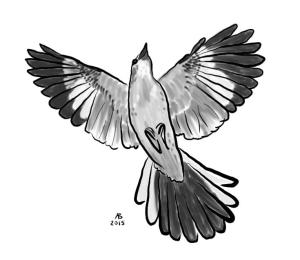 A mockingbird viewed from below as it soars through the air.