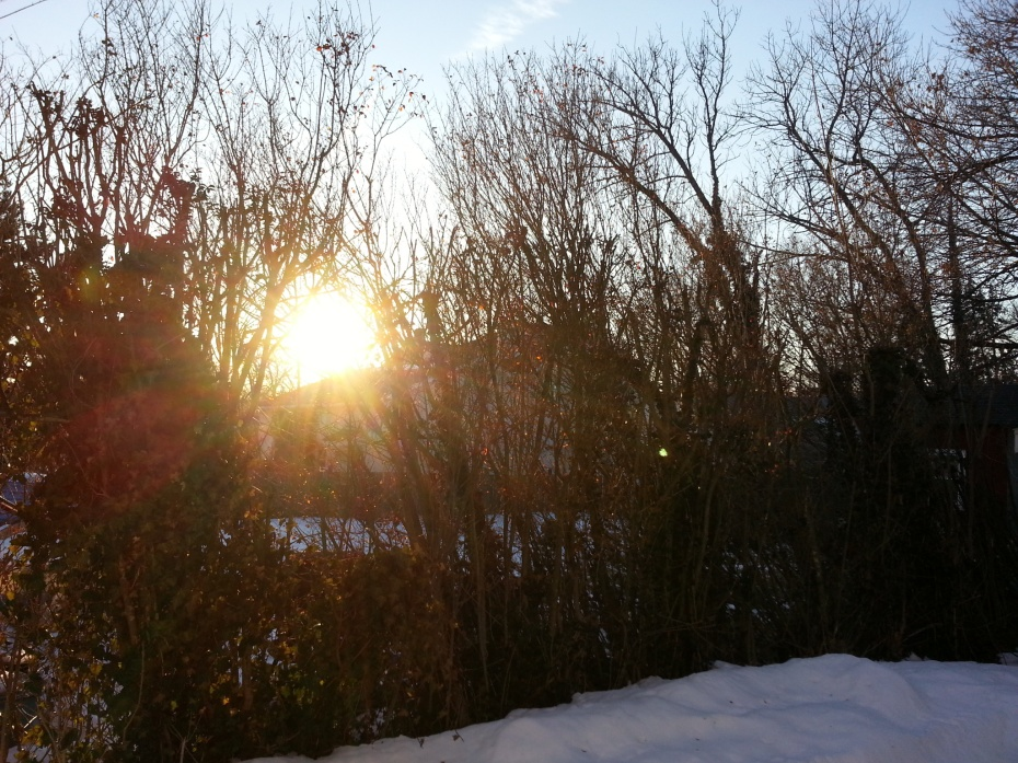 Sunlight streams through the trees at 6:45pm on the first day of Daylight Savings Time.