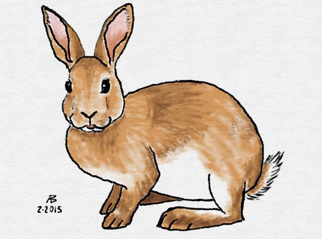 Digital watercolor and colored pencil sketch of a fawn rex rabbit.