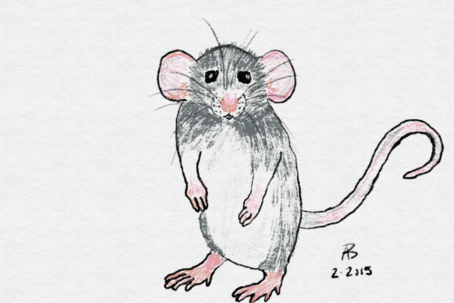A sketch of a grey rat standing on her hind legs, nose twitching.