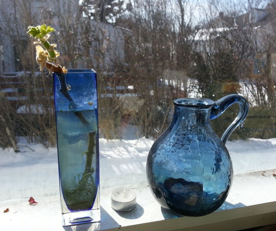 Winter snow frames the fragile bud and glass pitcher on my windowsill.