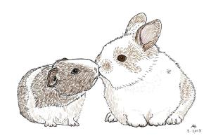 A guinea pig and a baby bunny exchange a little kiss.