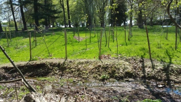 A section of fenced saplings on the far side of the Jenkintown Creek are part of the new riparian buffer.