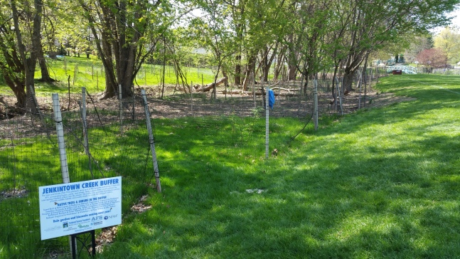 View of the new riparian buffer at AFS, with a sign explaining its purpose.