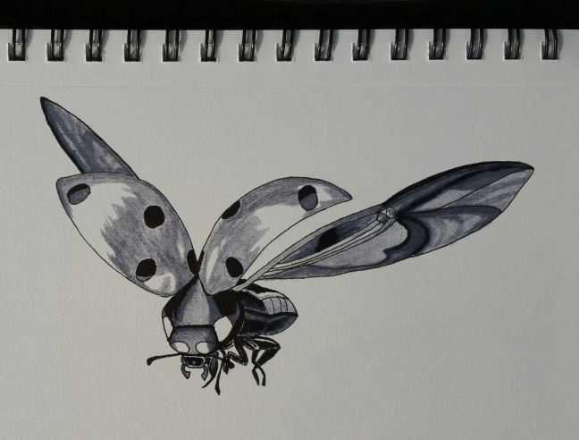 A sketch of a ladybug in flight