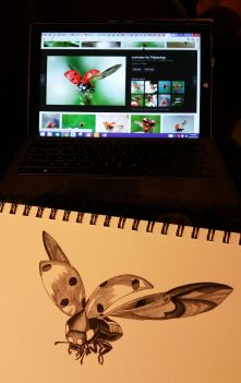 A black and white sketch of a ladybug with the reference photo on screen in the background.