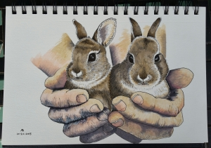 A pair of hands cups a pair of adorable wild baby bunnies.