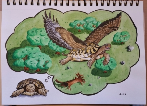 A tortoise sits dreaming that she can soar through the sky on finely feathered wings!