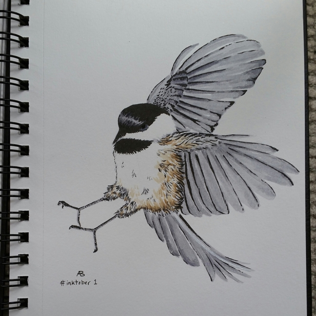 An ink drawing of a chickadee coming in for a landing, with feet outstretched to the left and wings flung back to the right.