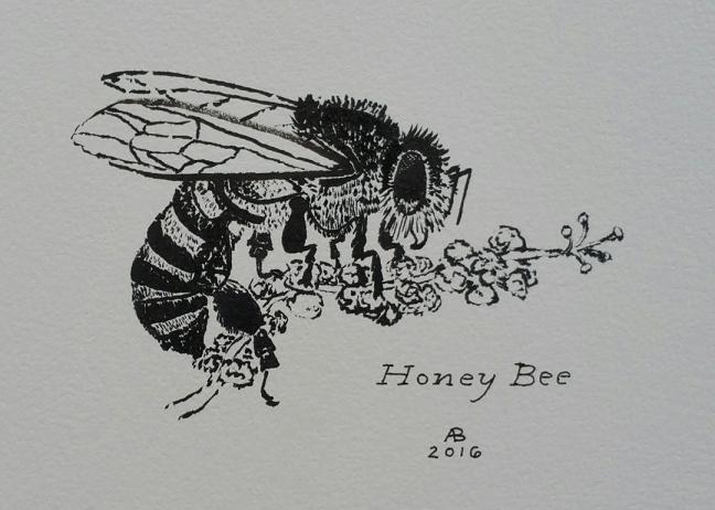 A black and white illustration of a honey bee gathering pollen.