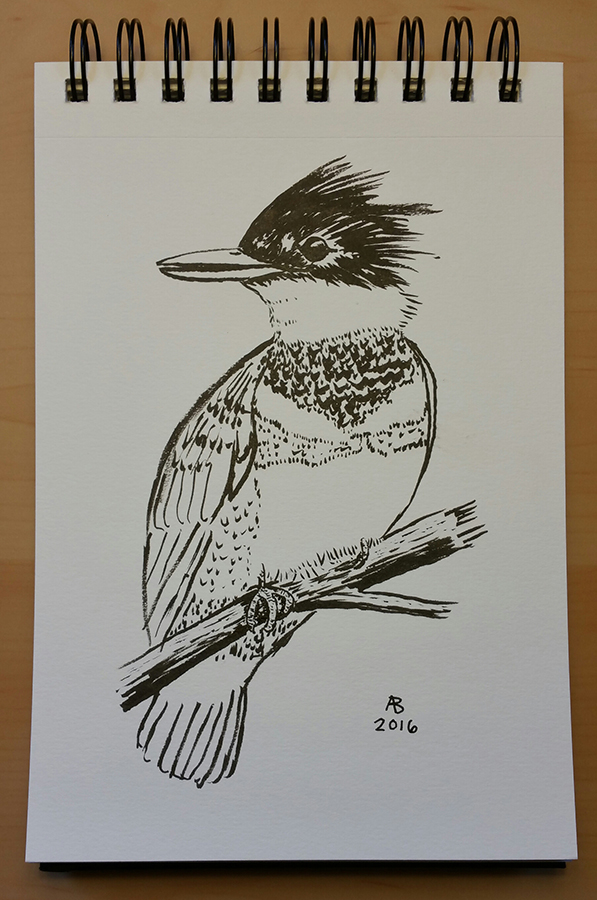 A black and white illustration of a belted kingfisher perched on a branch.