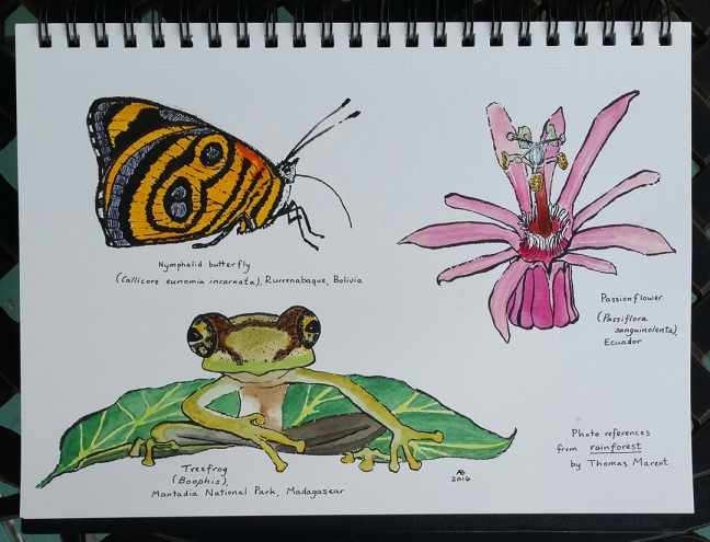 An illustration of a nymphalid butterfly, a passionflower, and a treefrog on a leaf.